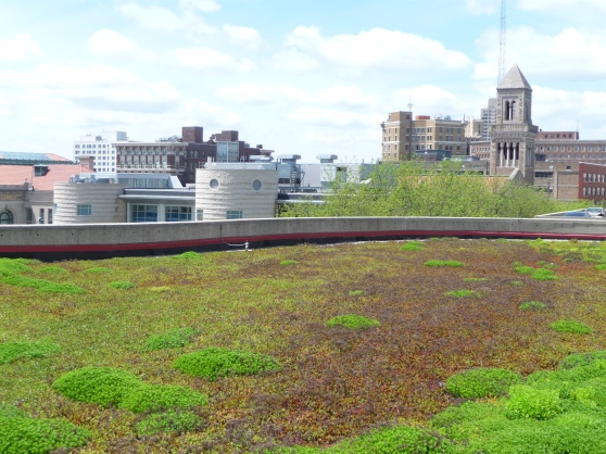 ATC green roof