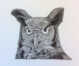 a pencil drawing of a great horned owl.