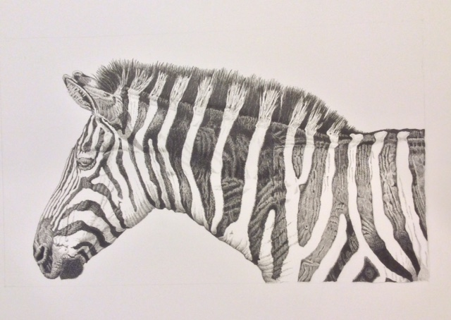 A pencil drawing of a zebra