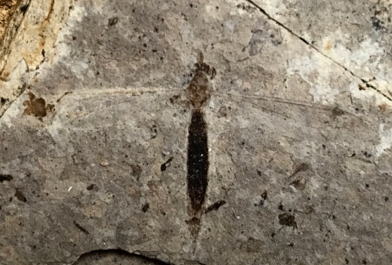 A fossilized fly.