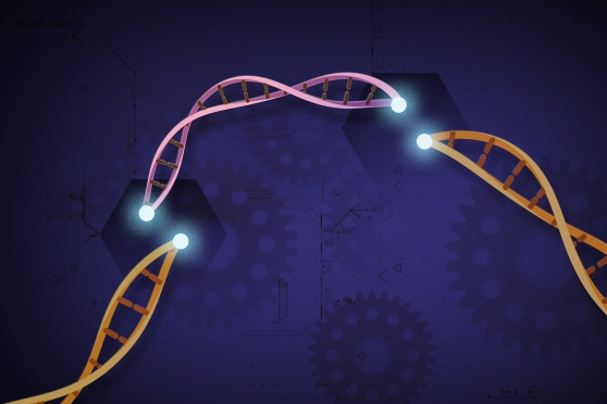 A graphic representation of gene modification, featuring colored strands of DNA with a background of gears that vaguely resembles a blueprint.