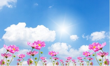 Pink flowers against a sunny, blue sky.